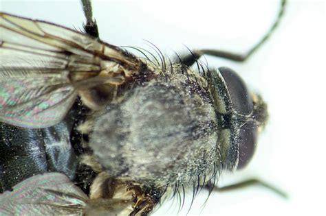 rid  gnats  fruit flies indoors hunker