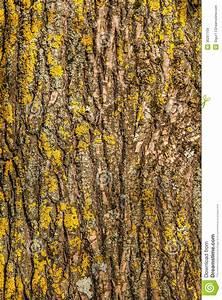 Achat Tronc Arbre Decoratif : tronc d 39 arbre images libres de droits image 36297169 ~ Zukunftsfamilie.com Idées de Décoration