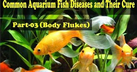 common aquarium fish diseases part  body flukes body