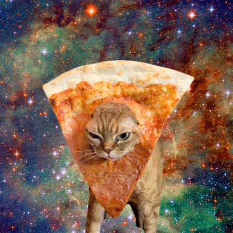 cat pizza pizza cat hazzahgram