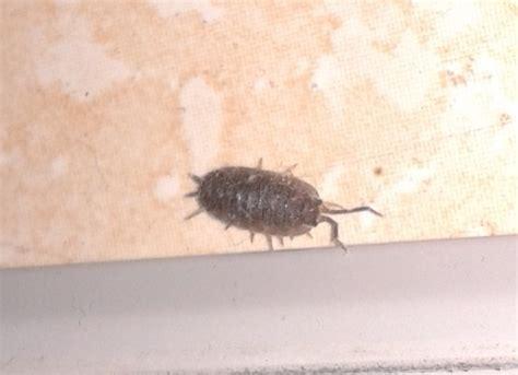 identification d un insecte
