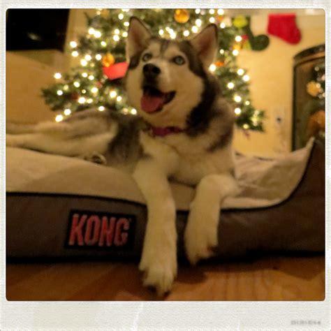 kong dog beds kong dog beds washable soft pet mat bed