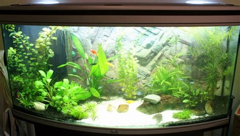 photo id 233 e d 233 coration aquarium eau douce