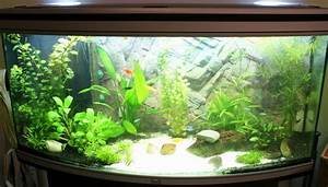 Idee Decoration Aquarium : photo id e d co aquarium eau douce ~ Melissatoandfro.com Idées de Décoration