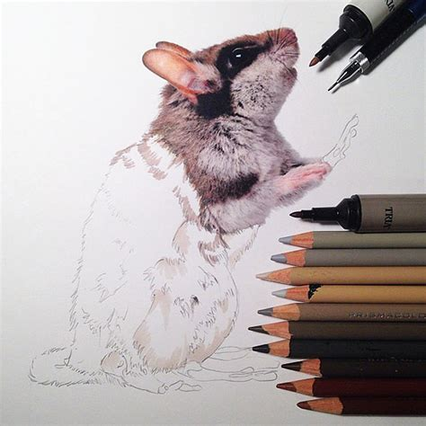 realistic animal drawings surrounded   tools