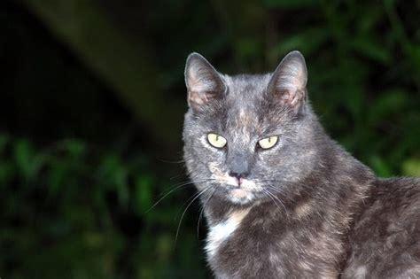 katzen hintergrundbilder kostenlos