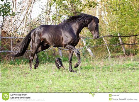 horse ukrainian breed horses young thoroughbred animal