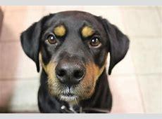 La toxoplasmosis en perros Síntomas y contagio