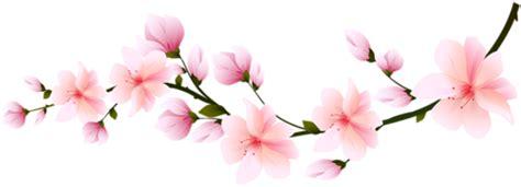Flores Flor Bonita Rosa 5 Png Transparent Cherry Blossom