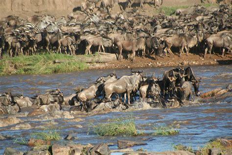 Wildlife of Tanzania Wikipedia