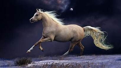 Horse Widescreen Desktop Wallpapers Iphone Ipad Android