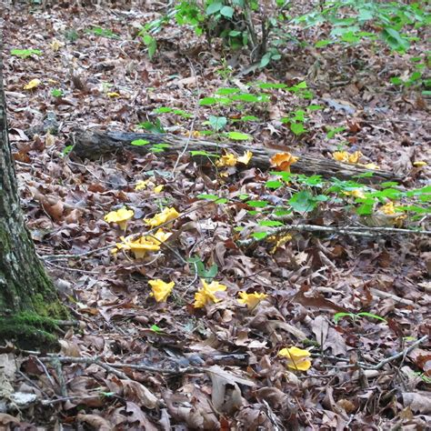 Farms Forests Foods Finding Wild Mushrooms Tips From