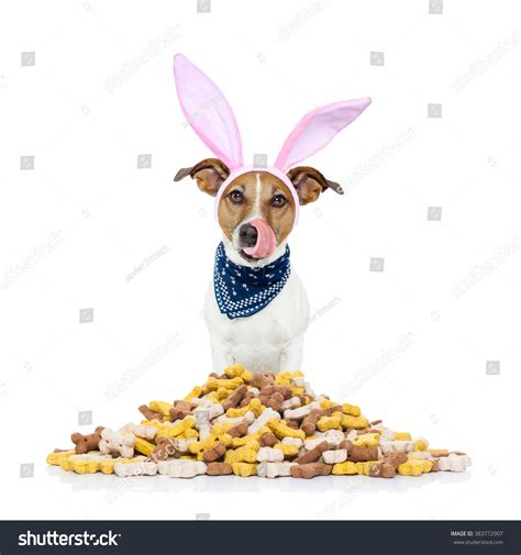 Easter Bunny Ears Jack Russell Dog Hungry And Licking