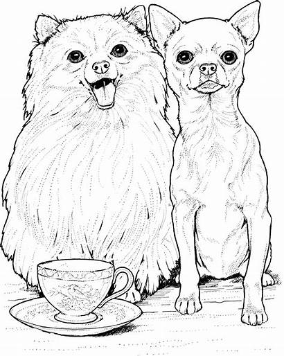 Coloring Chihuahua Dog Pages Printable Breed Pomeranian