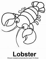 Lobster Coloring Outline Pages Drawing Buoy Footprint Line Footprints Printable Animal Sheets Sand Starfish Ocean Cartoon Lobsters Print Sea Under sketch template
