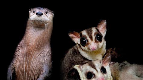 cutest nocturnal animals