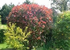 Arbuste Persistant Haie : haie arbustes persistants sud ouest arbres arbustes et ~ Premium-room.com Idées de Décoration