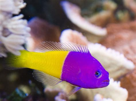 home bright  marine aquarium fish aquarium
