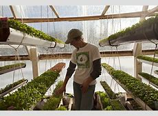 'Deep winter' greenhouse grows veggies yearround