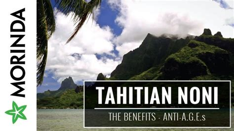 tahitian noni jus morinda indonesia tahitian noni juice maxidoid