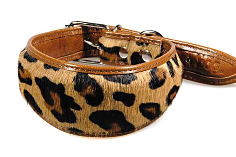 Cowhide Collars by Cowhide Hound Collar For Whippets Moda