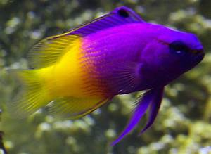 Bright Colored Fish - Bright Colors Photo (17699857) - Fanpop