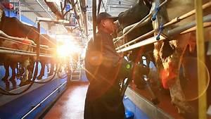 Dairymaster Herringbone Swing 20 Milking Parlour