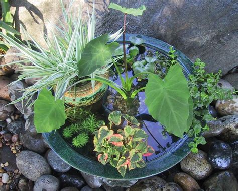a pond in a pot hgtv