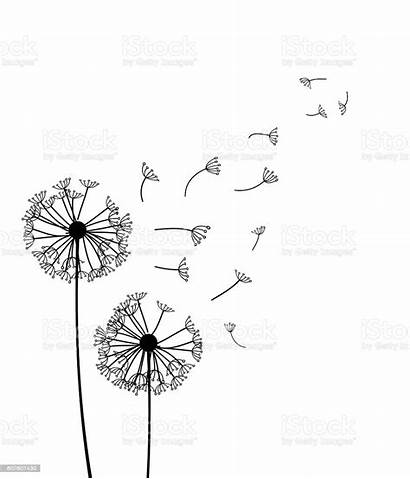 Dandelion Vector Illustration Clip Illustrations Drawing Graphics