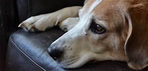dose gabapentin for dogs