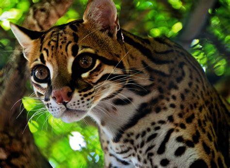 greatest amazon river basin animals