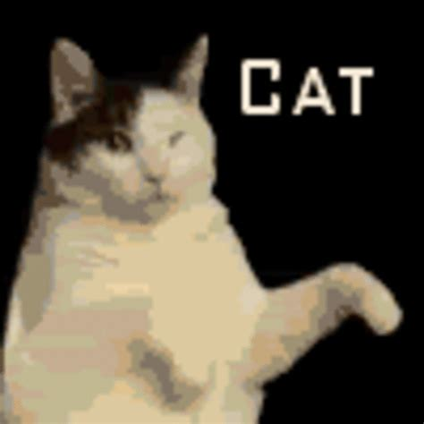 Dancing Cat Meme - image 27152 kitty cat dance know your meme