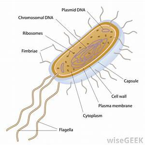 What Is A Recombinant Plasmid   With Pictures