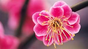 Pink Flowers Desktop Wallpapers - Wallpaper Cave