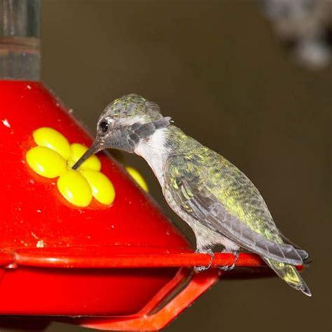 hummingbirds smithsonians national zoo