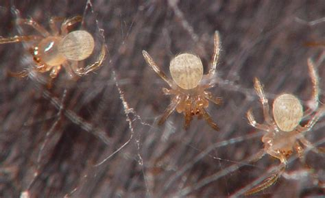 photographs  invertebrates