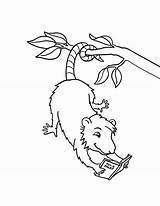 Possum Coloring Pages Reading Opossum Books Drawing Hanging Template Printable Colouring Tree Animal Read Sheets Preschool Animals Magic Worksheets Getcoloringpages sketch template