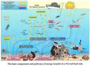 rainbow fish book marine life marine life cycles