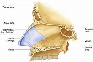 27  Nose  Nasal Cavity  And Paranasal Sinuses