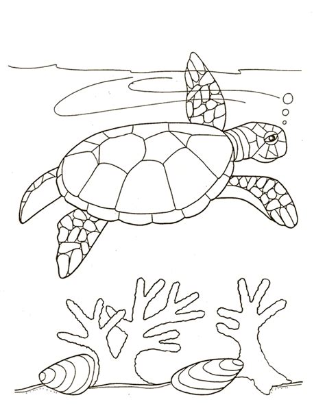 what color is a turtle of the jungle turtle pictures to print and color