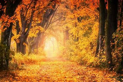 Fall Forest Wallpapers Autumn Spring Trees Australia