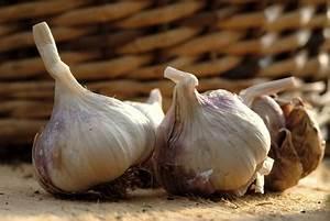 Culture De L Ail : ail plantation culture r colte de l 39 ail ~ Melissatoandfro.com Idées de Décoration