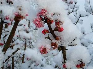 Blumen Im Winter : bl hpflanzen im winter ~ Eleganceandgraceweddings.com Haus und Dekorationen