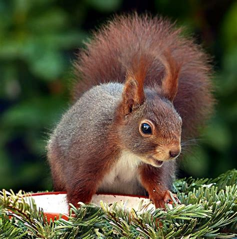 what to feed squirrels in backyard 28 images top 28