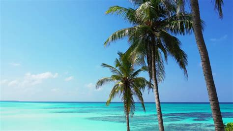 palm tress zoom   stock footage video  royalty