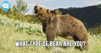 What Type Of Bear Are You?