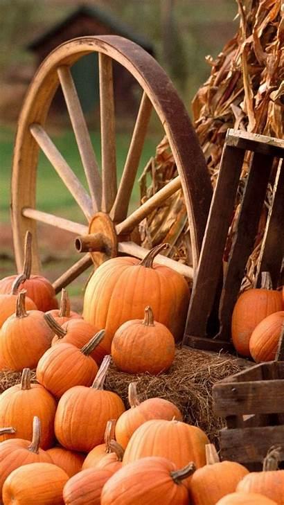 Pumpkins Autumn Iphone Harvest Pumpkin Fall Wallpapers