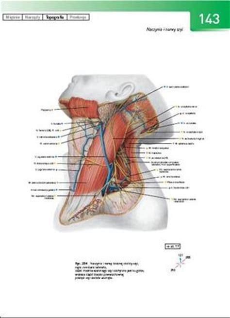 Atlas anatomii sobotta pdf herunterladen