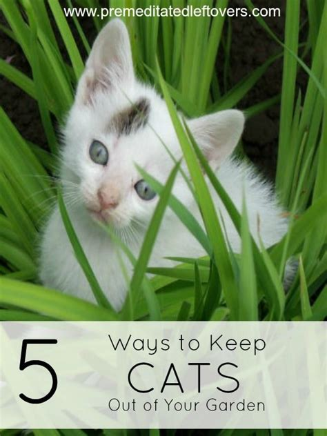 keep cats out of garden 5 ways to keep cats out of your garden
