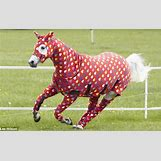 Images Of Baby Horses Running | 600 x 378 jpeg 65kB